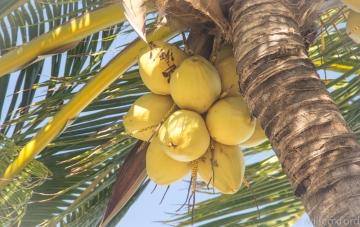 Quintana Roo-10