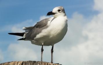 Quintana Roo-8